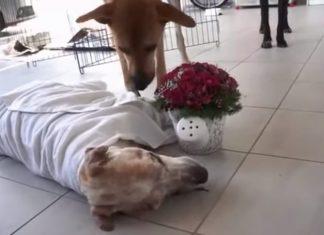 Ce pauvre chien solitaire et f