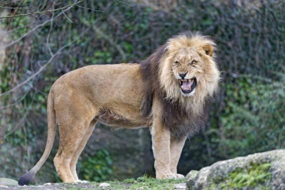 Flickr - Tambako The Jaguar