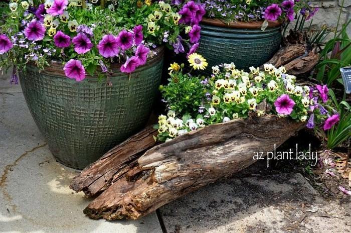 az plant lady