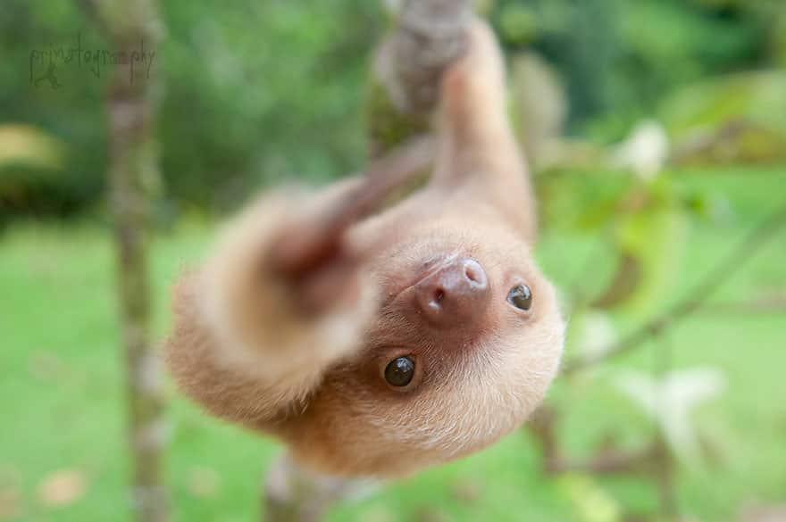 Le_Sloth_Institut_veille_sur-07