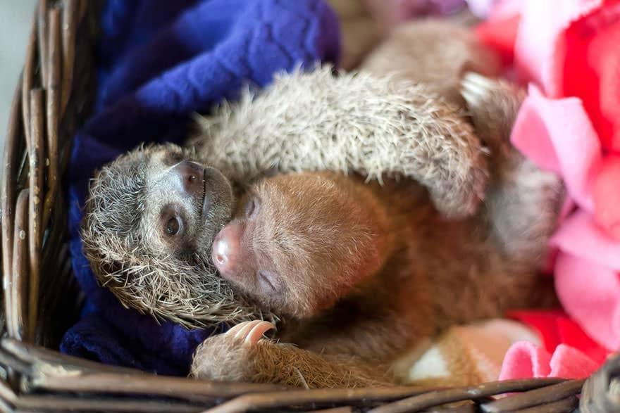 Le_Sloth_Institut_veille_sur-08