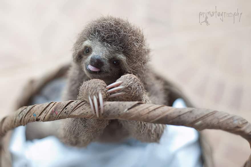 Le_Sloth_Institut_veille_sur-10