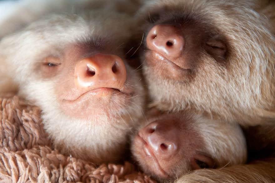 Le_Sloth_Institut_veille_sur-13