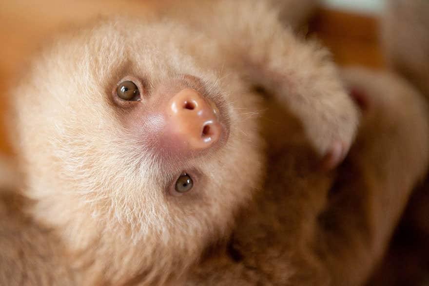 Le_Sloth_Institut_veille_sur-15