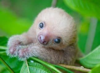 Le sloth institut veille sur f