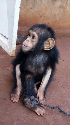 Lwiro Primates