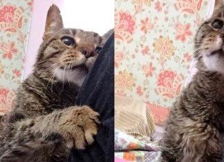 Un chat de 16 ans f