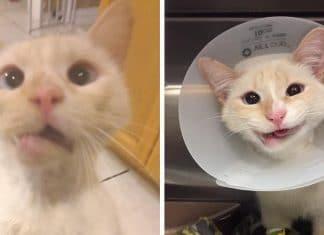 Une chatte secourue transforme sa f