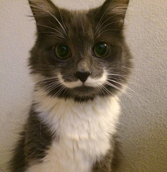 © Hamilton The Hipster Cat / Facebook