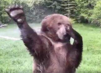Lorsque vous verrez cet ours f