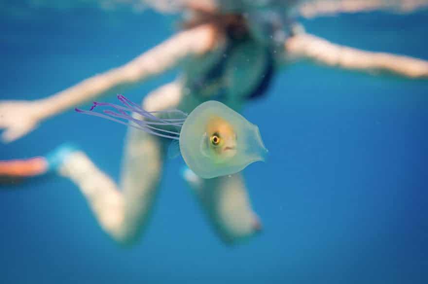 Un-poisson-piégé-dans-une_01