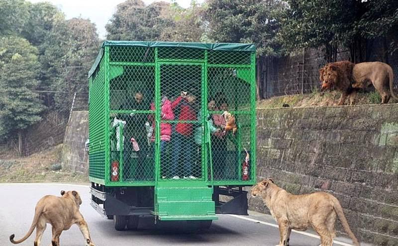 Un zoo chinois enferme ses 01