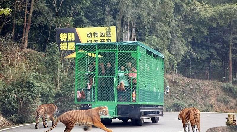 Un zoo chinois enferme ses 02