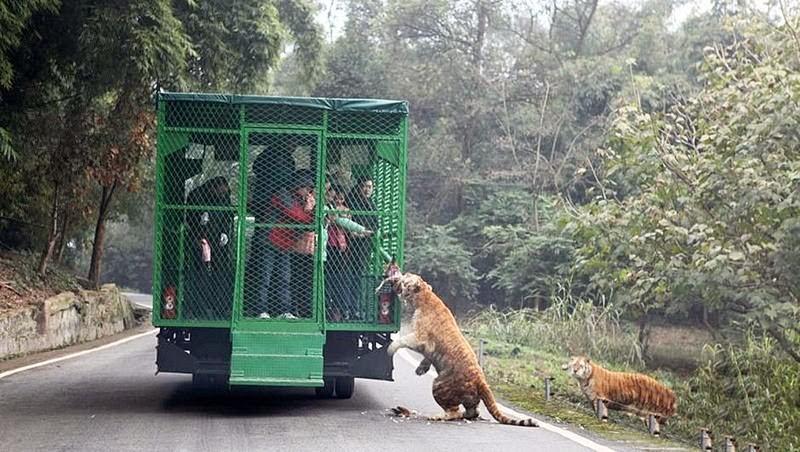 Un zoo chinois enferme ses 05