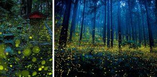 Des photographies surréalistes de lucioles f