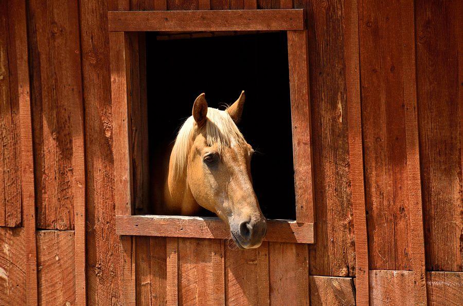 11 chevaux qui veulent simplement 02
