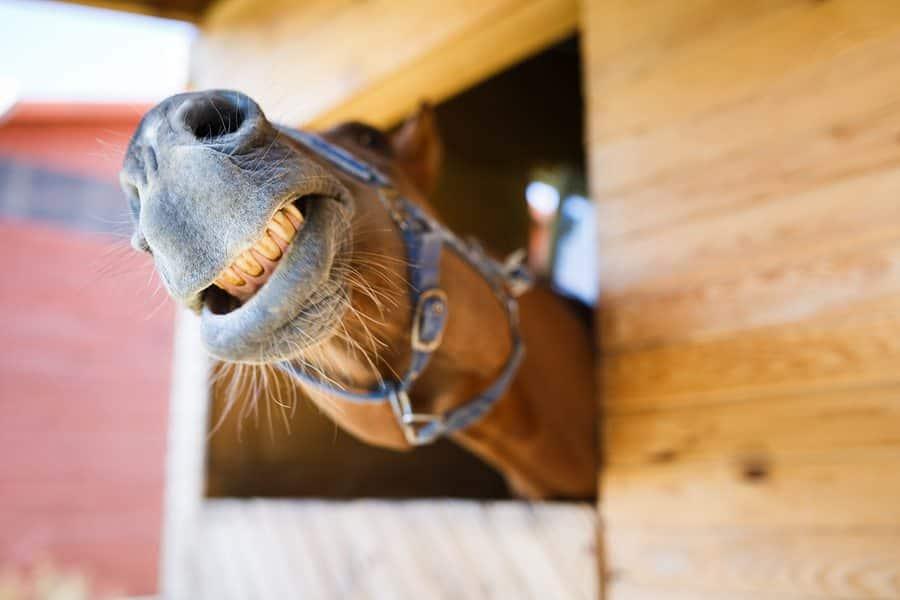 11 chevaux qui veulent simplement 03
