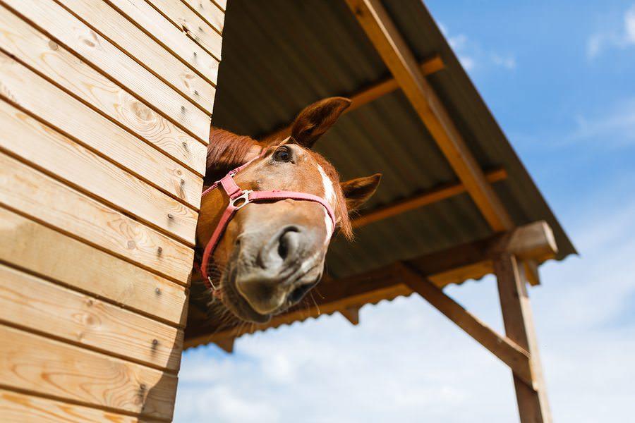 11 chevaux qui veulent simplement 04