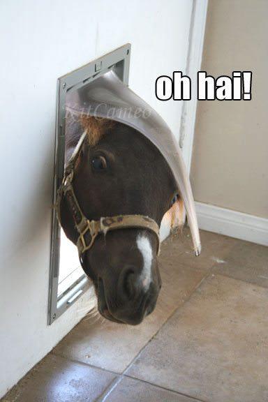 11 chevaux qui veulent simplement 08