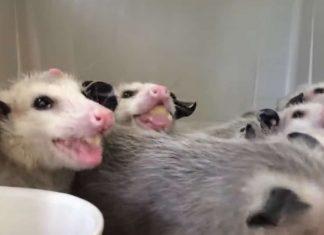 Ces bebes mangeant des bananes fv2