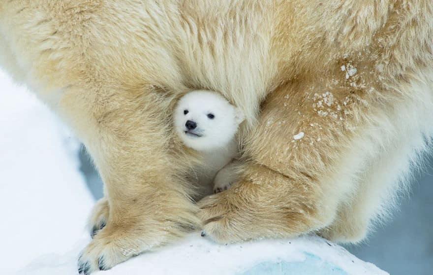 17-mamans-ourses-vraiment-trop-09
