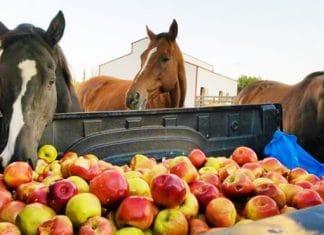 Ces chevaux rescapés ont trouvé f