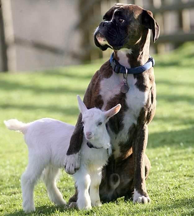 si_les_animaux_peuvent_soccuper-03