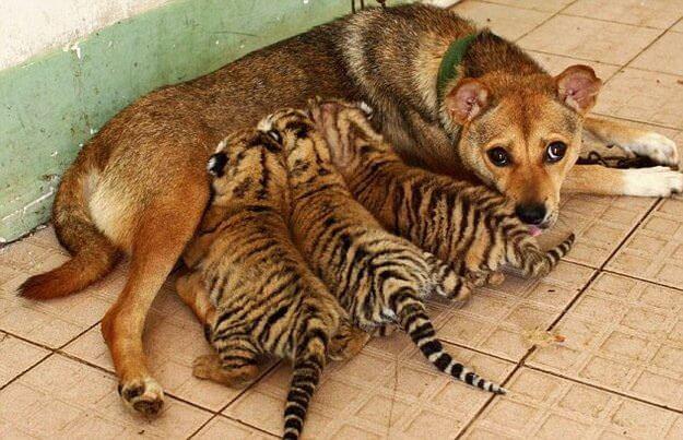 si_les_animaux_peuvent_soccuper-04