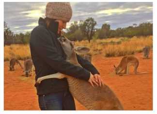 Cette femelle kangourou a ete fv2