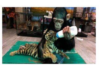 Si les animaux peuvent soccuper les fv2