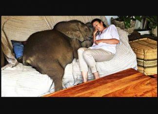 Un elephanteau rescape aime tellement sa fv2
