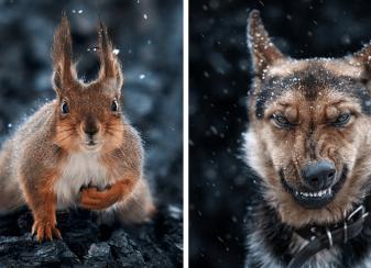 12 superbes portraits d'animaux réalisés f