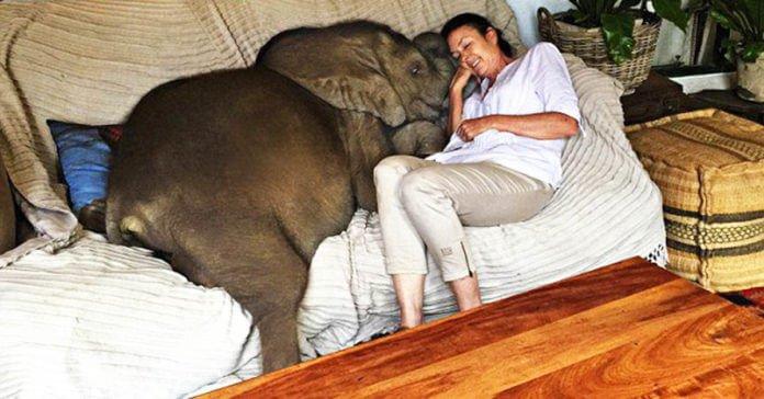 un_elephanteau_rescape_aime_tellement-01
