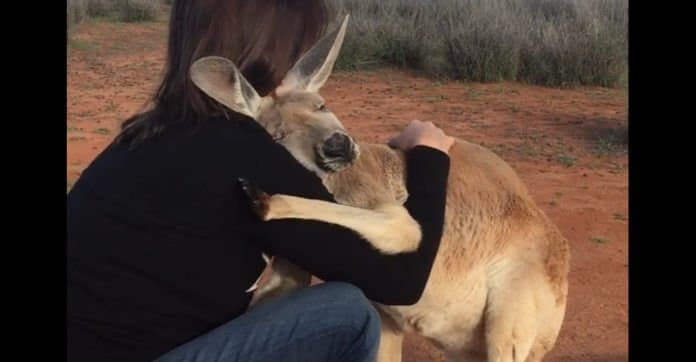 The Kangaroo Sanctuary Alice Springs
