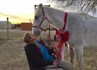 Un cheval age promis a 04s