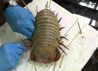 31 insectes si effrayants que f