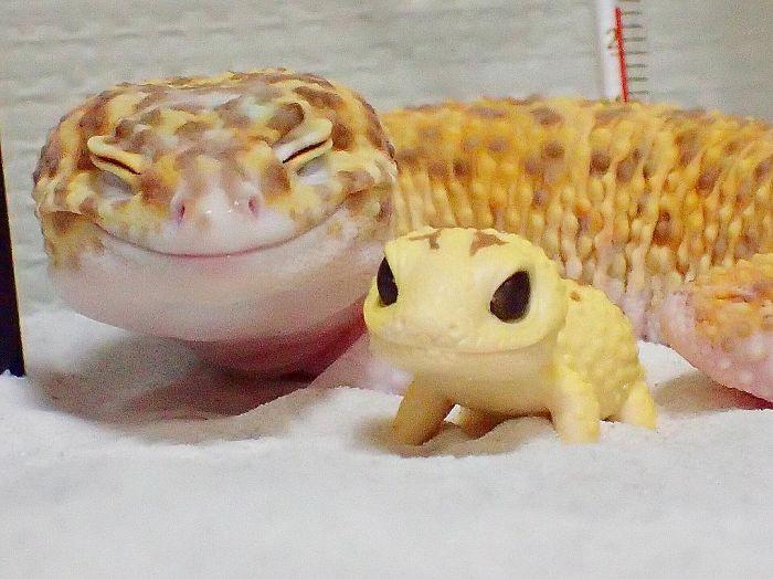 Ce gecko ne peut sempecher 01