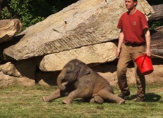 Cette mere elephant narrivait pas f