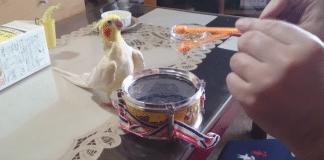 Un oiseau voit son proprietaire f