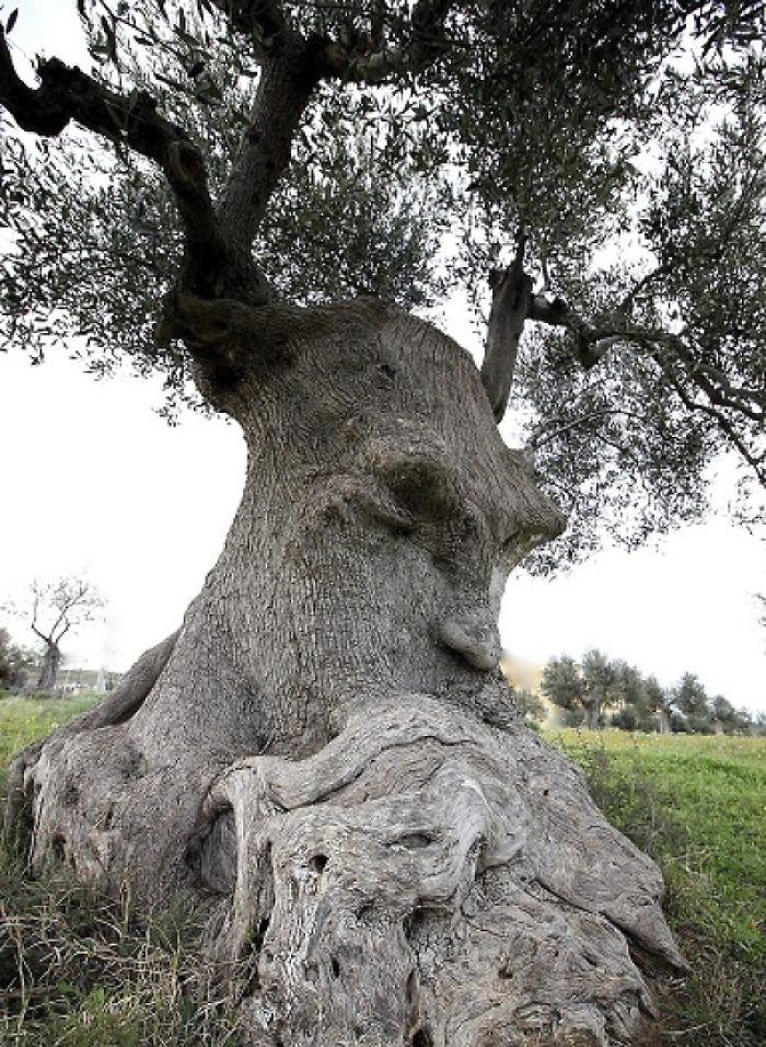 21 arbres qui ressemblent a autre 01 1