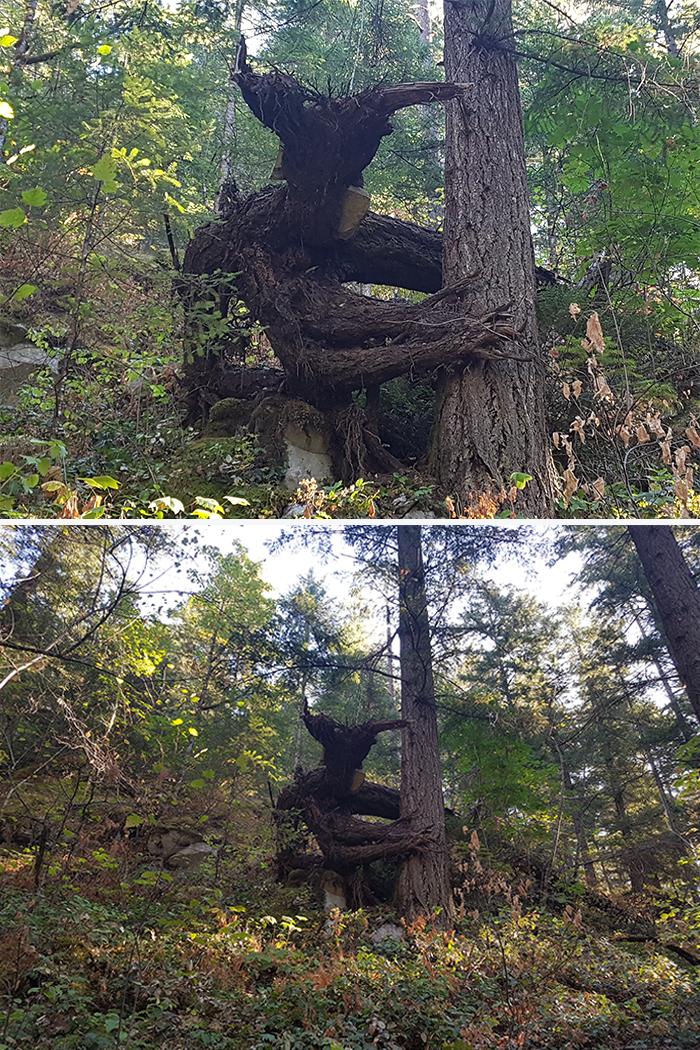 21 arbres qui ressemblent a autre 02