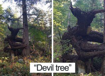21 arbres qui ressemblent a autre f