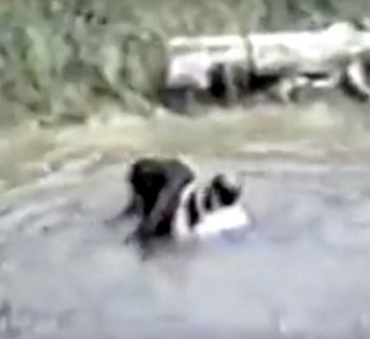 Un zoo refuse de sauver 04s