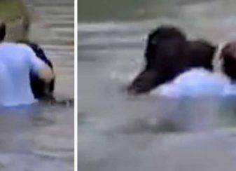 Un zoo refuse de sauver f