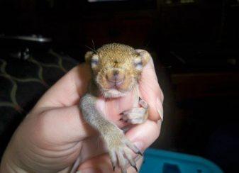 Un ecureuil revient regulierement rendre 01