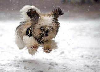 32 animaux decouvrant la neige 26