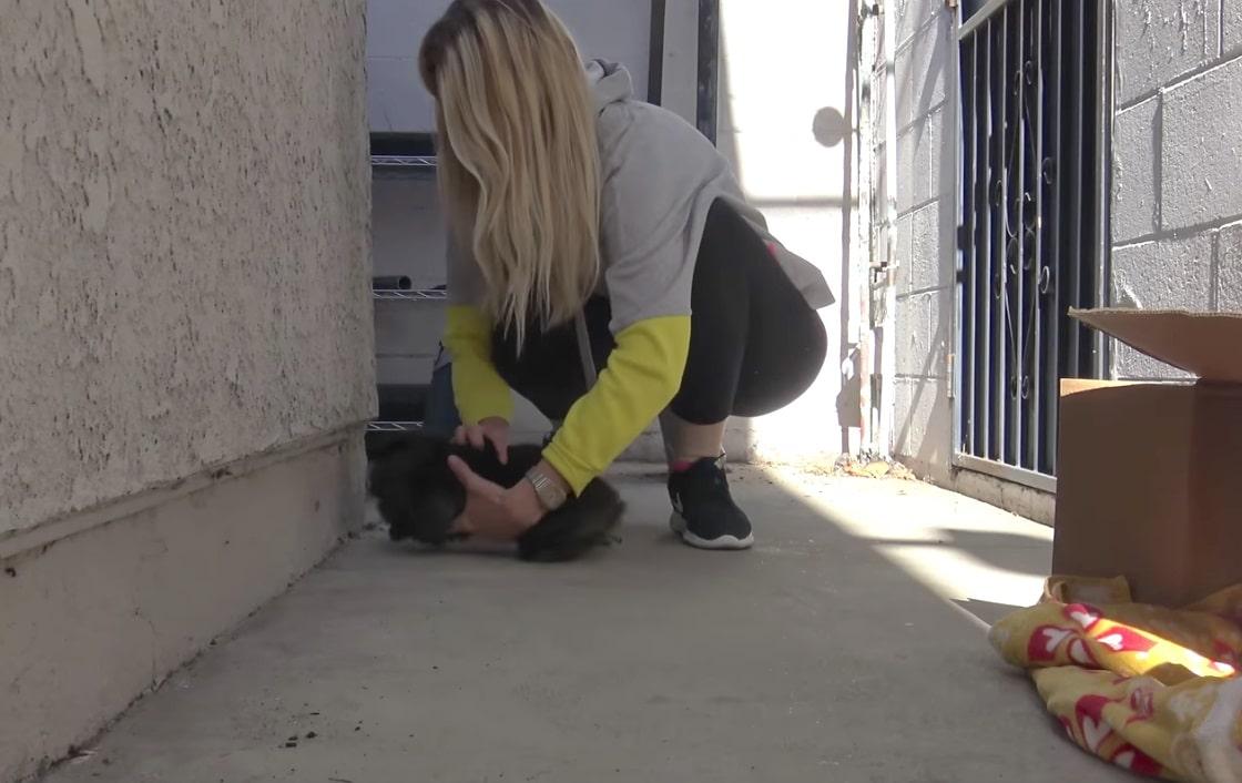 Hope for paws sest lance dans 02