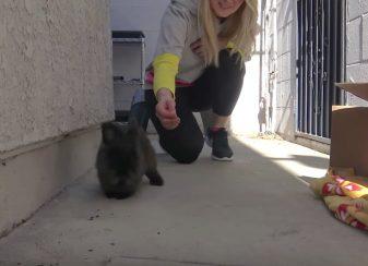 Hope for paws sest lance dans f