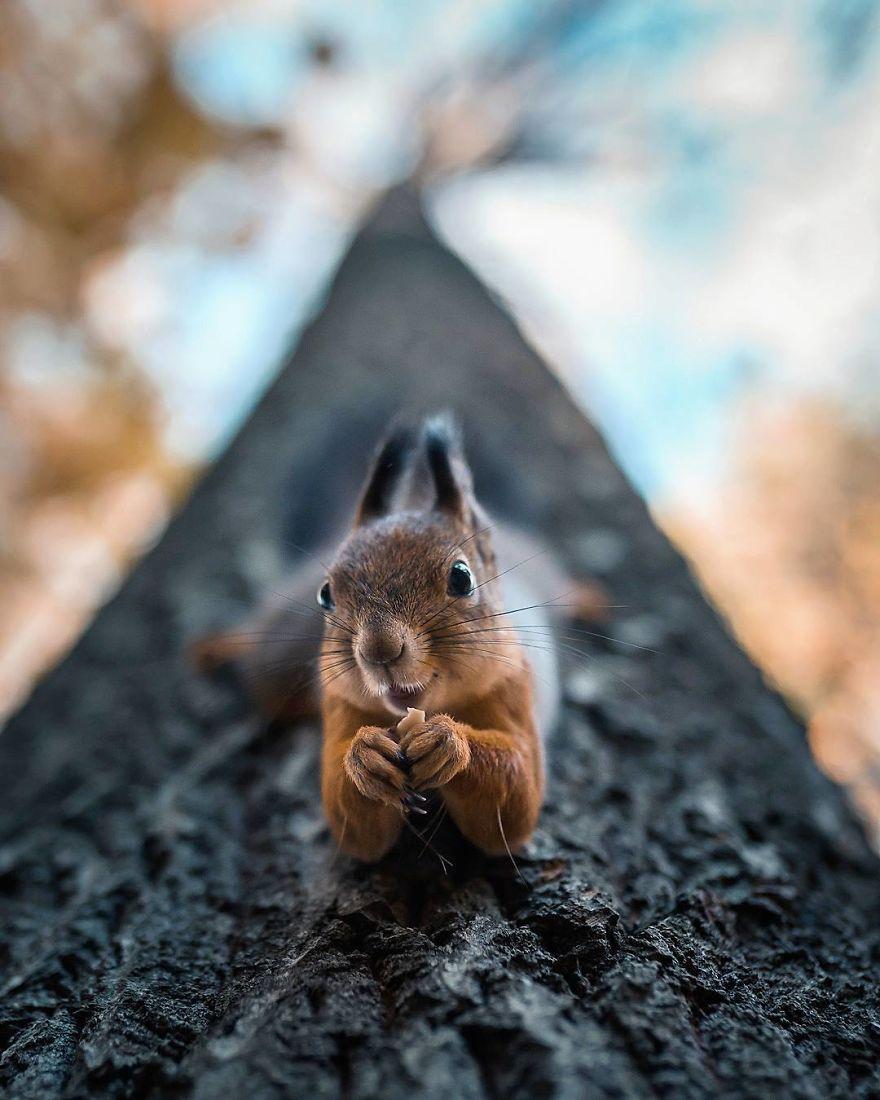 Un photographe traite les animaux 01
