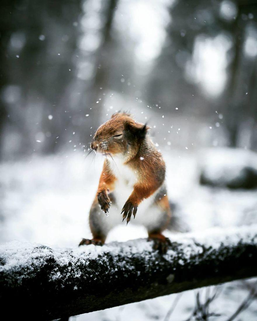 Un photographe traite les animaux 03